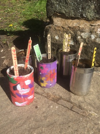 tin planters... let's see if our herbs grow well